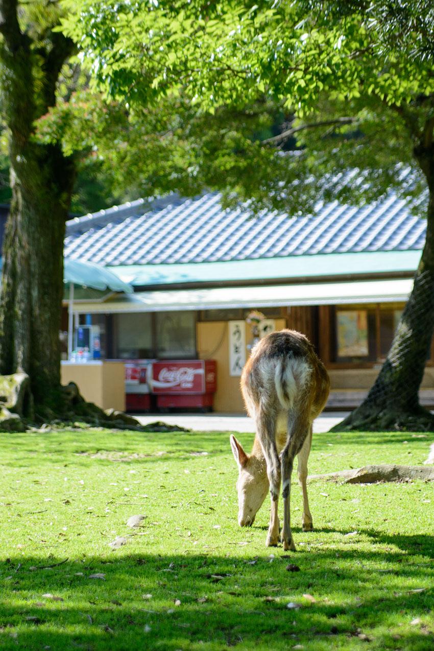 売店の前の鹿